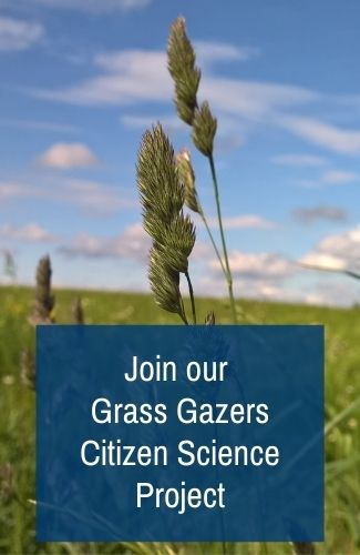 Join our Grass Gazers Citizen Science Project